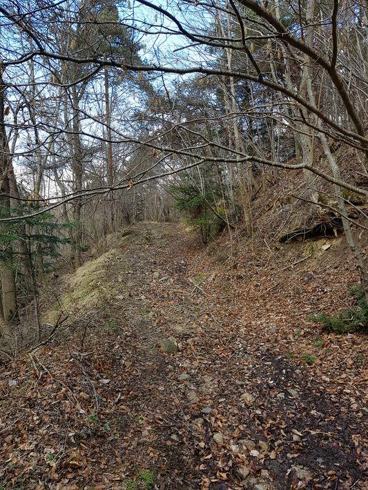 Sentier dans la forêt d'Ardemez