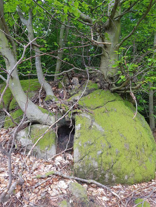 Plantation sur rocher